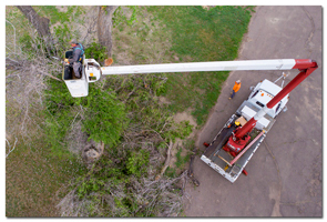 aerial image of a tree trimmer
