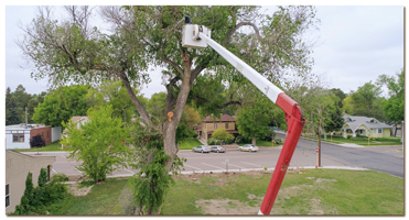 aerial image of tree trimmer