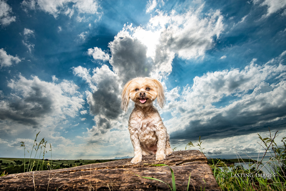 Dog picture of a pet portrait by Lasting Images Photography